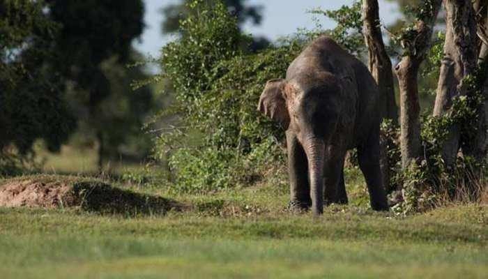 जंगली हाथी के हमले में सेवानिवृत्त BSF जवान की मृत्यु