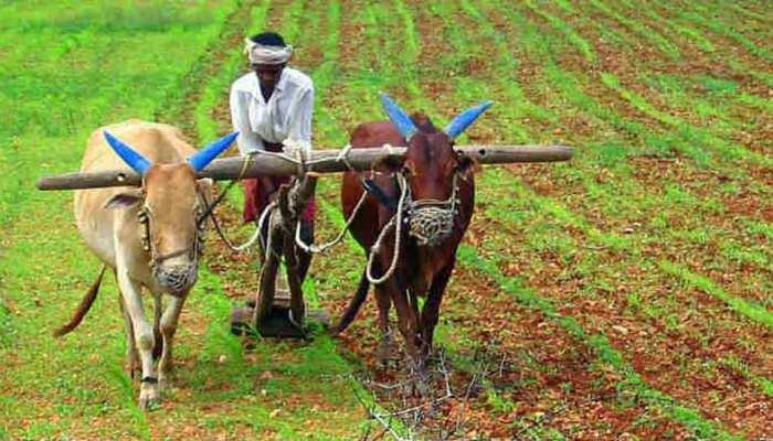 जलवायु परिवर्तन की वजह से गेहूं, धान जैसी फसलों के उत्पादन में कमी, स्टडी का दावा