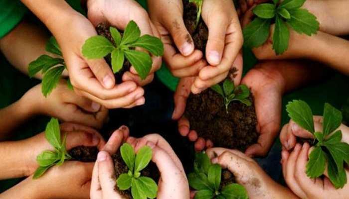 बिहार में अगस्त में मनाया जाएगा 'वन महोत्सव', लगाए जाएंगे 1.50 करोड़ पौधे