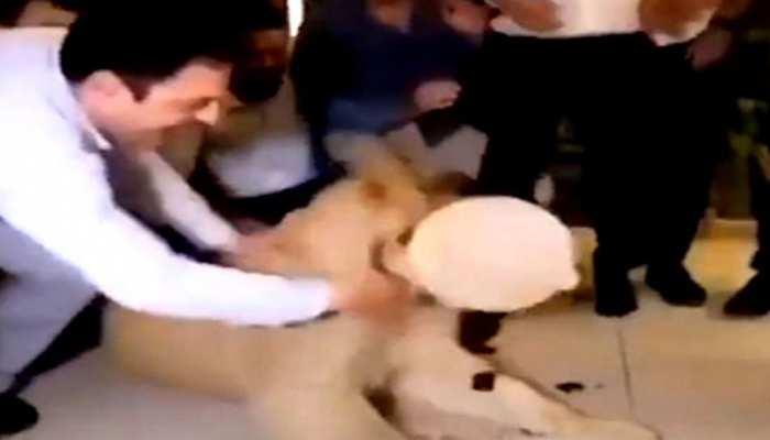 बर्थडे पार्टी में शेर के मुंह पर केक लगाना इस शख्स को पड़ा महंगा, VIDEO है ऐसा कि...
