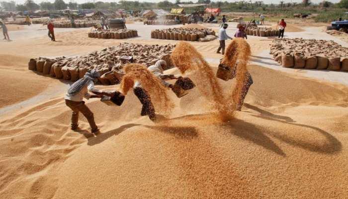 गेहूं की बंपर खरीदी से मुसीबत में फंसी कमलनाथ सरकार, बढ़ सकता है 1500 करोड़ का भार