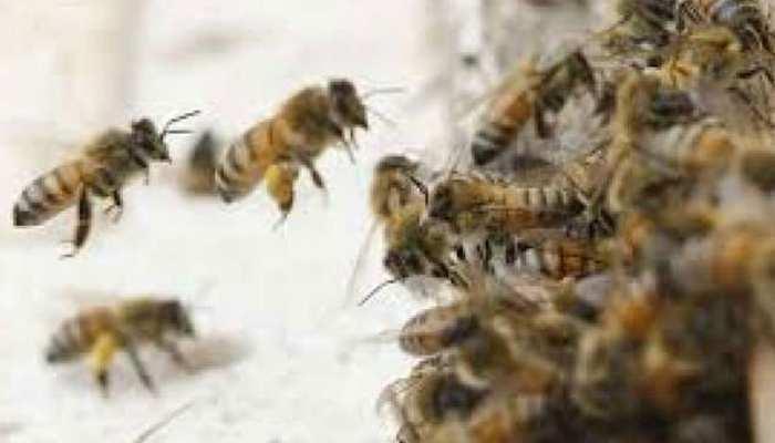 नोएडा: मधुमक्खियों के डंक ने मचाया कहर, 1 बच्चे की मौत, दूसरे की हालत नाजुक