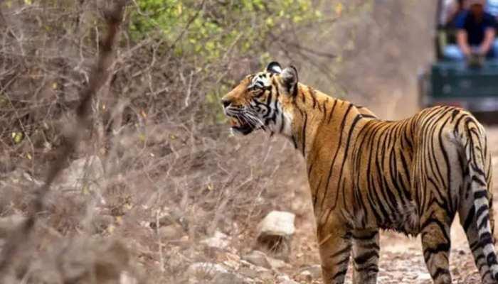 राजस्थान: प्रचंड गर्मी से बेहाल रणथंभोर नेशनल पार्क के जीव-जन्तु