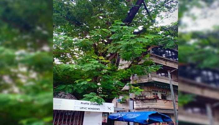 मुंबई के मालाड इलाके में पेड़ की शाखा गिरने से एक व्यक्ति की मौत