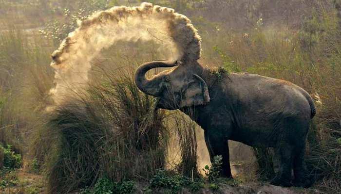 जिम कॉर्बेट पार्क में बढ़ी हाथियों के मौत की संख्या, सामने आई चौंकाने वाली वजह