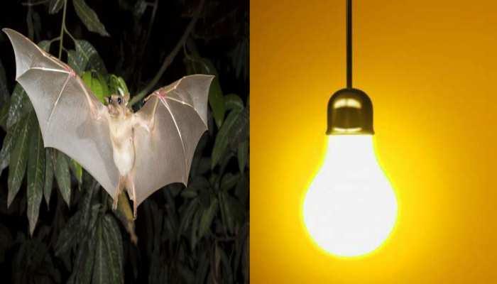 पुराने भोपाल में बिजली कटौती के लिए चमगादड़ जिम्मेदार: बिजली विभाग