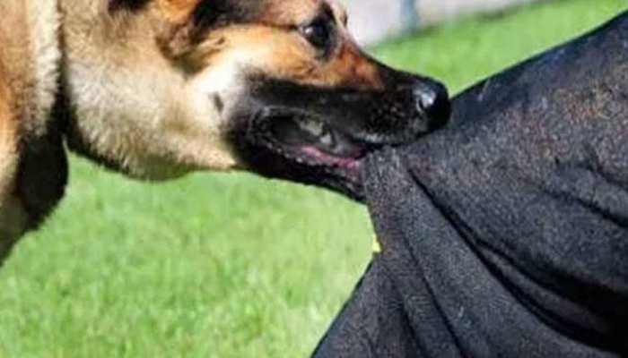 घर में सो रहा था 3 साल का मासूम, आदमखोर कुत्तों का झुंड आया और उठा ले गया, मिला शव