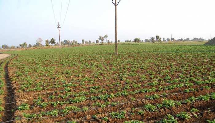 मथुरा : खेत की नाप के एवज में 5000 की रिश्वत मांगने वाला कानूनगो निलंबित