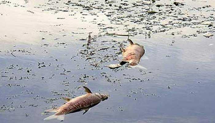 प्रशासन की सुस्ती से जौनपुर में अस्तित्व की जग लड़ रही है गोमती नदी