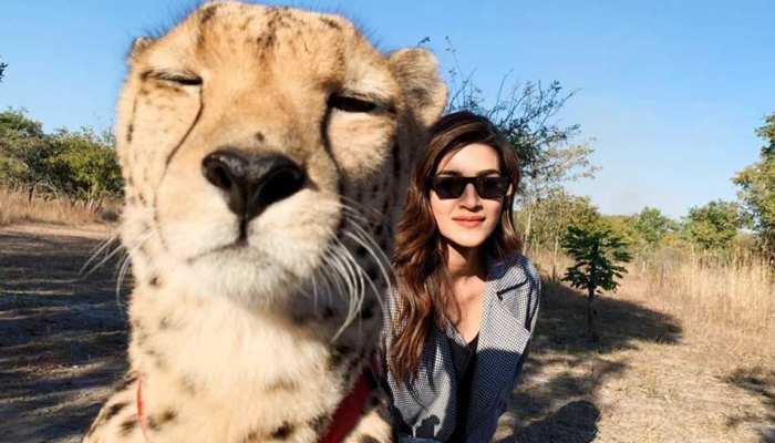 Kriti sanon troll on sharing selfie with cheetah, people told FAKE