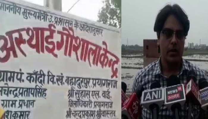 प्रयागराज की गौशाला में 35 गायों की मौत, ग्रामीण बोले, 'चारा-पानी न मिलने से गई जान'