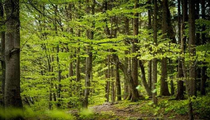भोपाल का हरित क्षेत्र घटा, तापमान बढ़ा, सरकार शुरू करेगी पौधरोपण अभियान