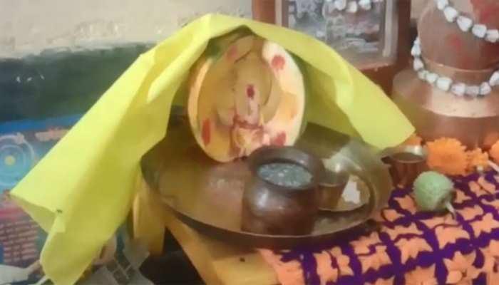 पपीते में भगवान शिव की आकृति देख हैरान हुए लोग, विधिवत की पूजा