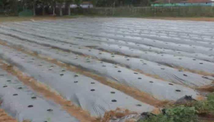 झारखंड : किसानों के लिए फायदेमंद है इजरायली टपक विधि, सरकार कर रही है प्रेरित