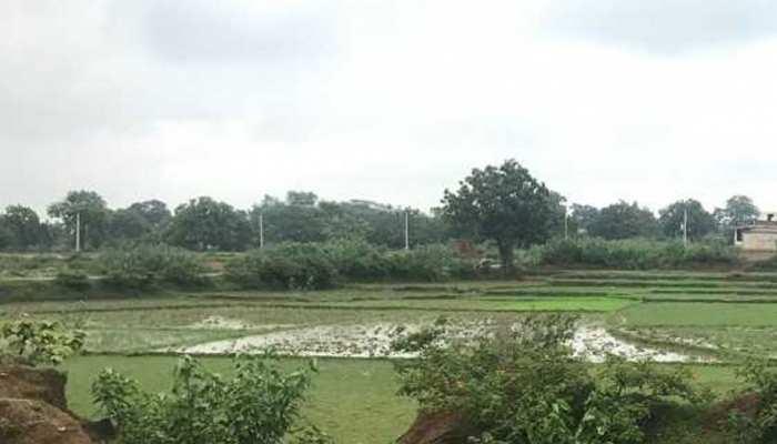 अजमेर: बंजर चारागाह में उगाए गए 50 हजार पौधे, बना हरियाली का प्रतीक
