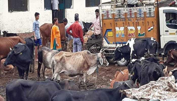 उत्तराखंड: गायों की देखभाल को लेकर मचा बवाल, जुलाई महीने में 107 गाय और पशुओं की मौत