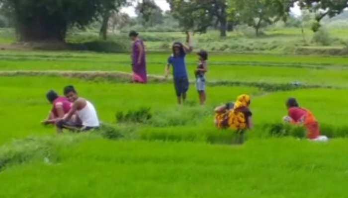 झारखंड : झमाझम बारिश से किसानों के चेहरे पर लौटी मुस्कान, धनरोपनी में जुटे अन्नदाता