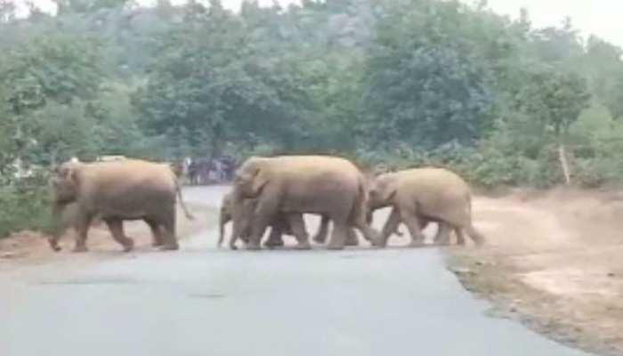 झारखंड: लोहरदगा में भटके हाथियों को वन अधिकारियों ने पहुंचाया जंगल, ग्रामीणों ने ली राहत की सांस