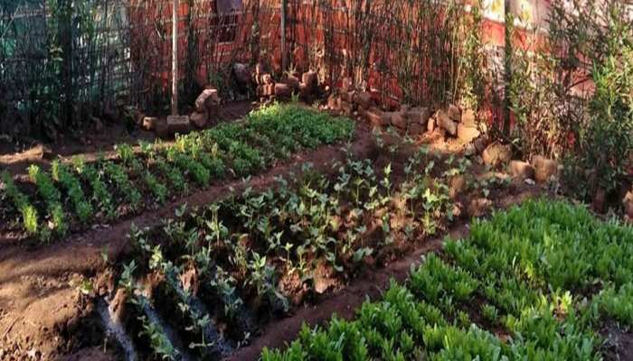 झारखंड में बच्चों के कुपोषण को दूर करने के लिए महिलाएं बना रही हैं 'किचन गार्डन'