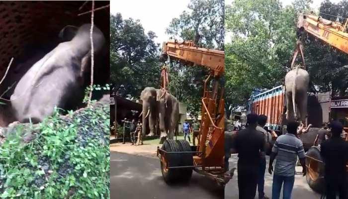 VIDEO: कुएं में गिरा हाथी, वन विभाग की टीम ने घंटों की कड़ी मशक्कत के बाद ऐसे किया रेस्क्यू