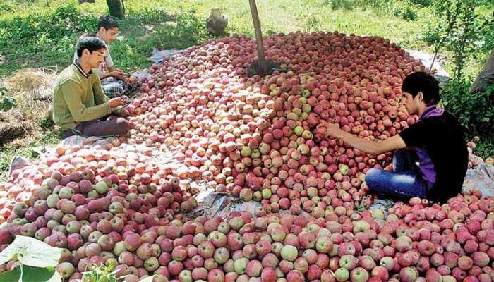 कश्मीर : सेब किसानों के आएंगे 'अच्छे दिन', मोदी सरकार देगी 2,000 करोड़ रुपये का लाभ