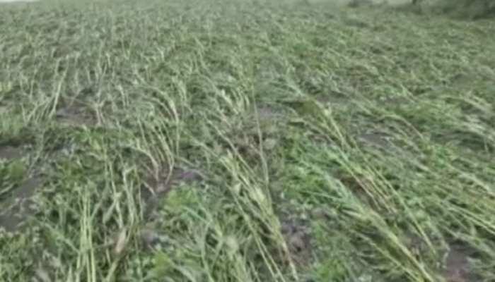 बांसवाड़ा में बारिश की भेंट चढ़ी किसानों की मेहनत, फसलों को हुआ भारी नुकसान