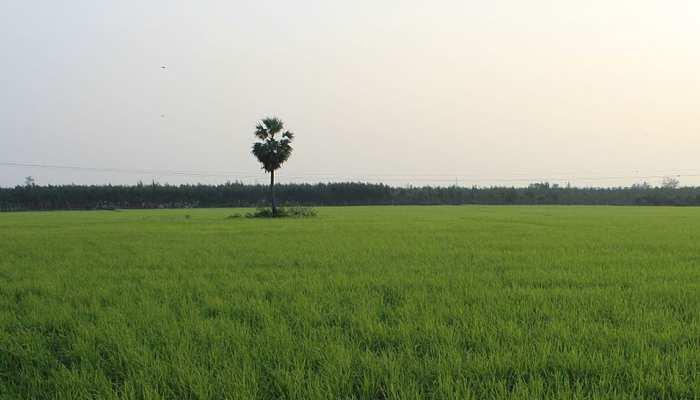 बिहार के 8 जिलों के 40 गांवों में होगी जलवायु अनुकूल खेती