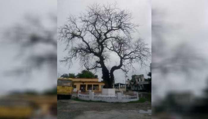 बिहार: चंपारण सत्याग्रह की निशानी 'नीम का पेड़' उपेक्षित