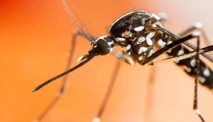 कोटा में लगातार जारी है डेंगू का कहर, अब तक 17 मामले आए सामने