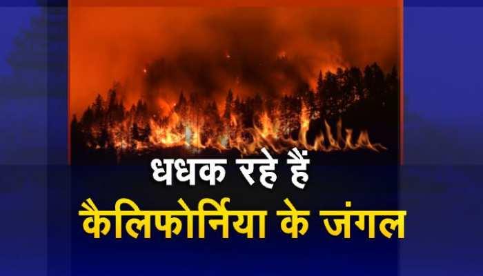कैलिफोर्निया के जंगलों में आग! अबतक 7 हजार 5 सौ 42 एकड़ का इलाका जलकर 'राख'