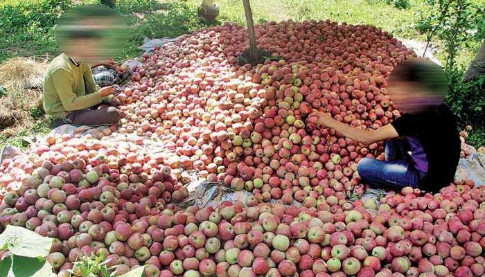 जम्मू कश्मीर: 'हुजूर हम तो फल कारोबारी हैं, हमें गोली मारने से किसी का क्या भला होगा'