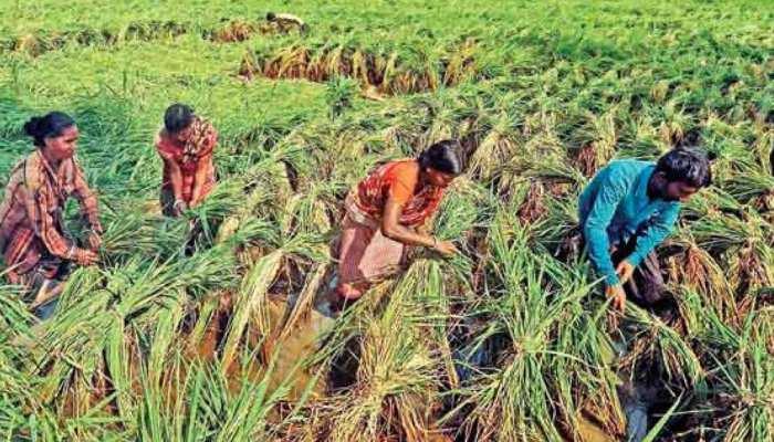 राजस्थान: किसानों के हितों के लिए सरकार का बड़ा फैसला, पंजीयन की सीमा को 10% बढ़ाया