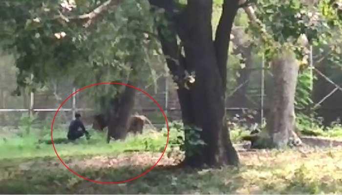VIDEO: दिल्ली चिड़ियाघर में शेर के बाड़े में कूदा शख्स और शेर के पास जाकर बैठ गया