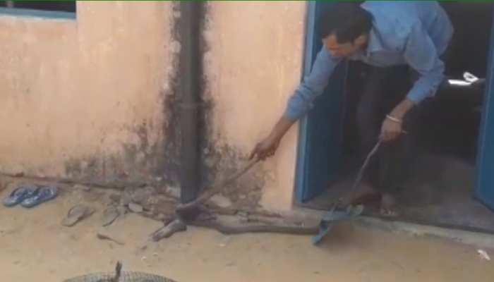 सीकर: राकेश सैनी को है सांपों से प्यार, यूट्यूब से सीखा सांप पकड़ने का तरीका