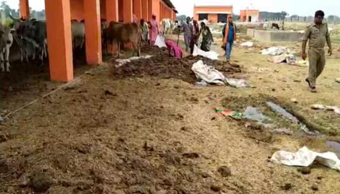 सिद्धार्थनगर: गौशाला में मिले 15 गायों के शव, हिंदू युवा वाहिनी कार्यकर्ताओं ने किया हंगामा