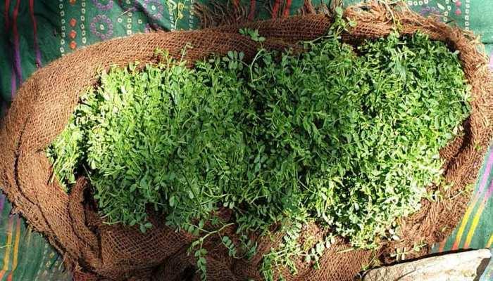 हजार रुपये किलो में बिक रही है गोवर्धन पूजन और अन्नकूट में इस्तेमाल होने वाली ये सब्जी