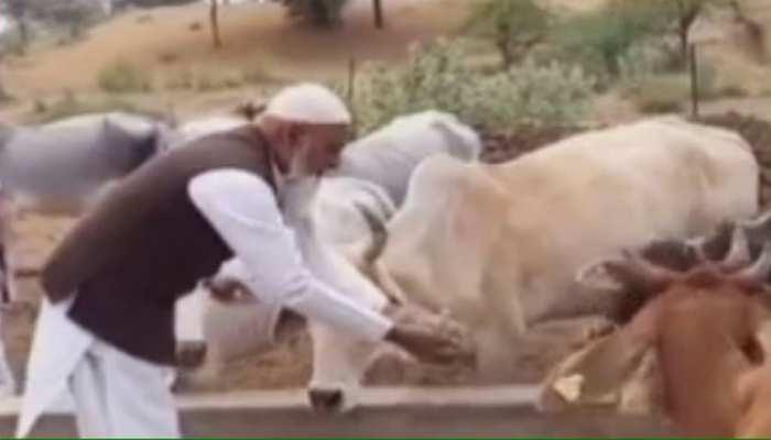 चूरू: धर्म के ठेकेदारों को जवाब देती गौशाला, मुस्लिम कर रहे गायों की सेवा