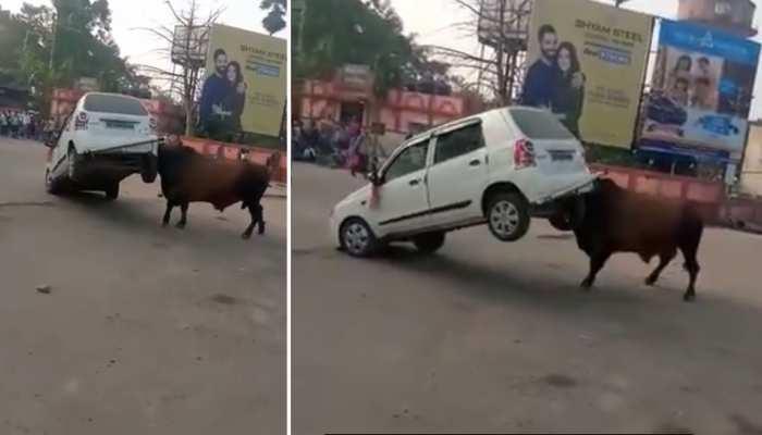 VIDEO: हॉर्न बजाने पर सांड का गुस्सा भड़का, पटक-पटककर कर दिया कार को क्षतिग्रस्त