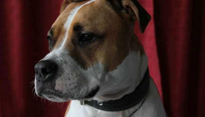 उदयपुर: बेजुबान कुत्ते को कार से बांधकर घसीटा, बर्बरता से गई बेजुबान की जान
