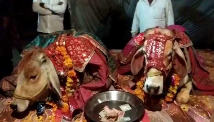 अजब MP में ग्रामीणों ने मिलकर कराई ये गजब शादी, देखकर सब हो गए हैरान