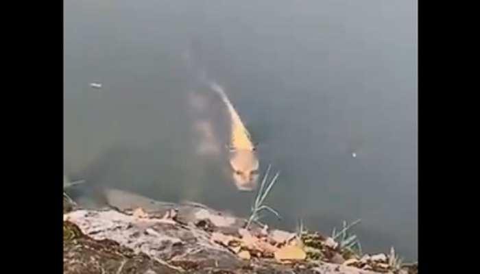 चीन में दिखी नायाब मछली, जिसकी आंखें, नाक और मुंह हूबहू किसी मनुष्य जैसे हैं...