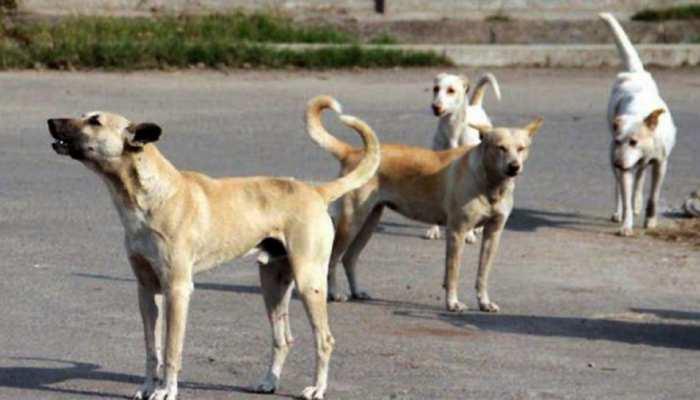 कोलकाता में 6 कुत्तों को बिजली का झटका देकर मार दिया गया, जानें क्या है पूरा मामला