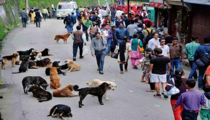 शिमला : आवारा कुत्तों को गोद लो, कूड़ा शुल्क माफी के साथ पार्किंग भी मिलेगी मुफ्त