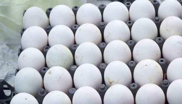 MP: बच्चों और गर्भवतियों को पोषण आहार में अंडा देने के प्रस्ताव को किया गया मंजूर