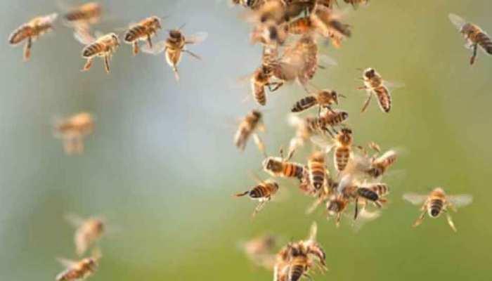 पिकनिक मनाने पार्क में जुटे थे लोग; मधुमक्खियों ने किया हमला, 60 छात्र घायल