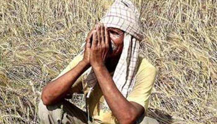 चने में नहीं मिला लाभ तो किसानों ने बदला अपना तरीका, गेहूं की बुवाई में ले रहे दिलचस्पी