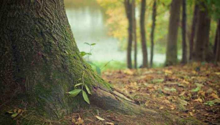 भोपाल: बिना अनुमति काटे थे दो पेड़, नगर निगम ने लगाया लाख रुपए का जुर्माना