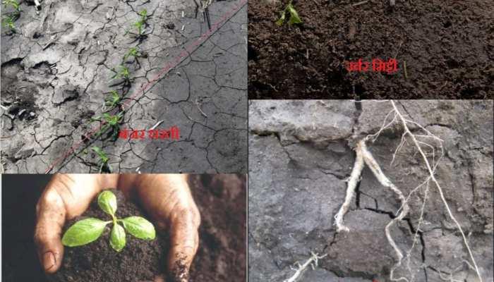 दुनिया की खाद्य सुरक्षा पर खतरे की घंटी, बीमार होती जा रही है हमारी धरती