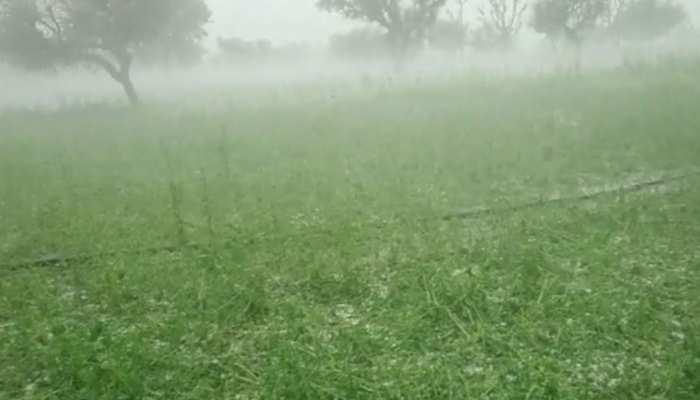 राजस्थान में मावठ बनी किसानों के लिए बड़ी मुसीबत, फसलों को हुआ भारी नुकसान