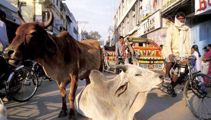 डीडवाना: आवारा पशुओं पर लगाम लगाने के लिए प्रशासन ने शुरू की नई पहल...